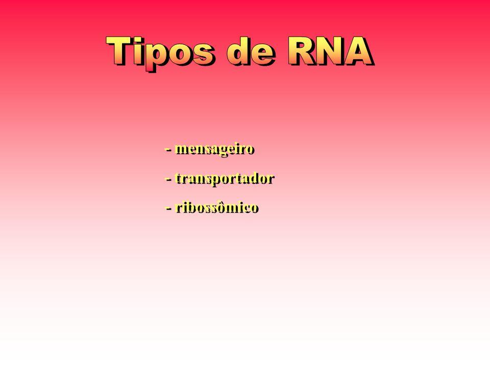 Tipos de RNA - mensageiro - transportador - ribossômico