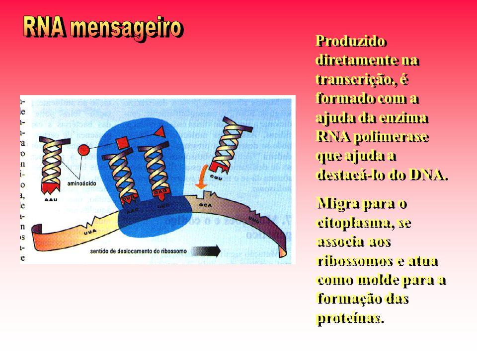 RNA mensageiro Produzido diretamente na transcrição, é formado com a ajuda da enzima RNA polimerase que ajuda a destacá-lo do DNA.
