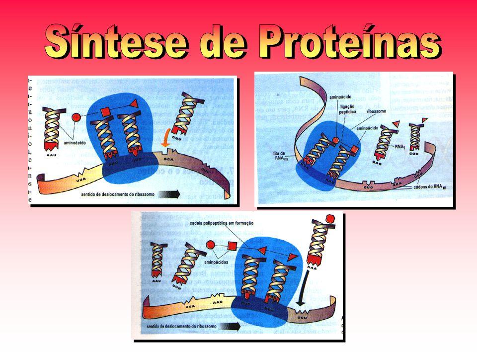 Síntese de Proteínas
