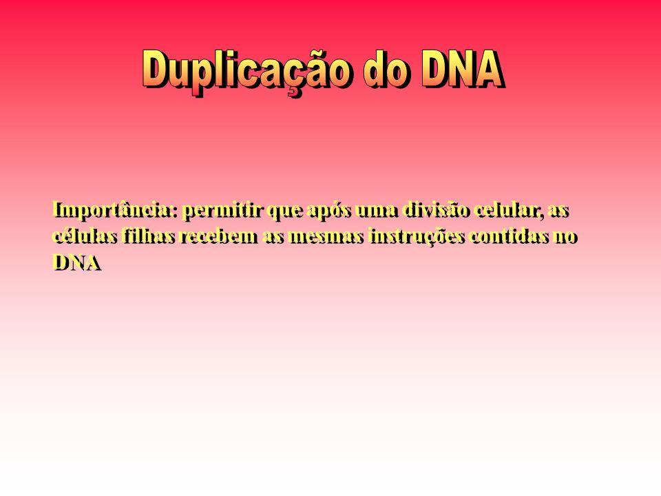 Duplicação do DNA Importância: permitir que após uma divisão celular, as células filhas recebem as mesmas instruções contidas no DNA.