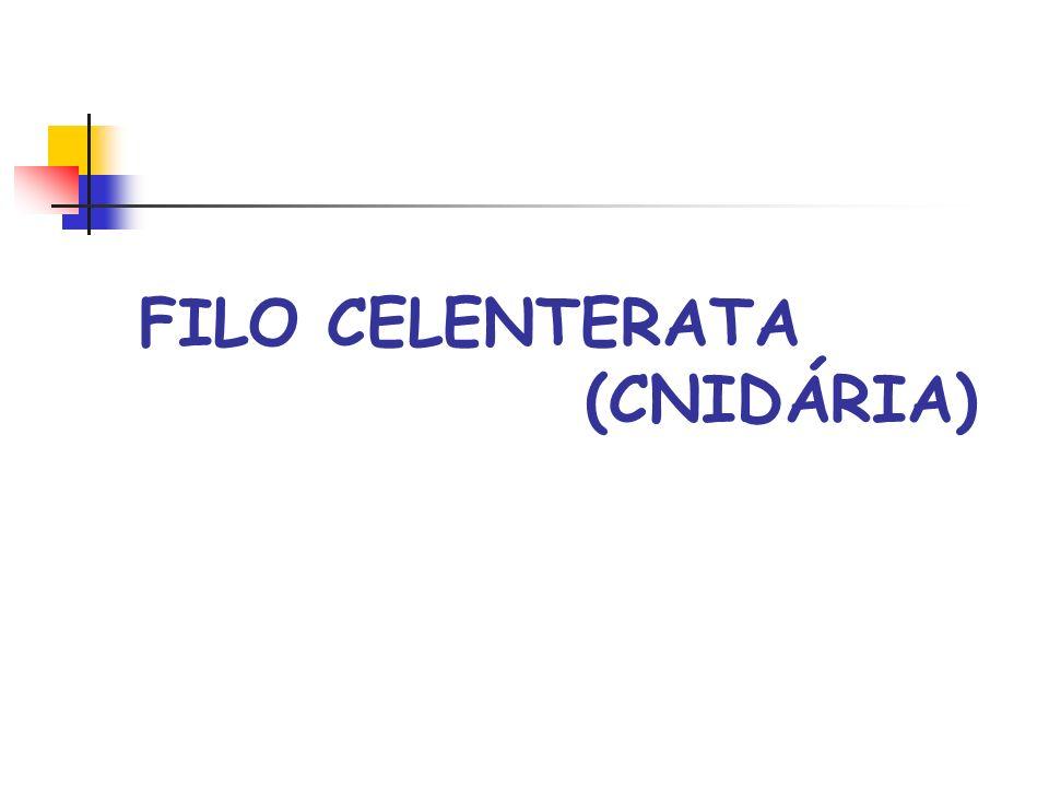 FILO CELENTERATA (CNIDÁRIA)