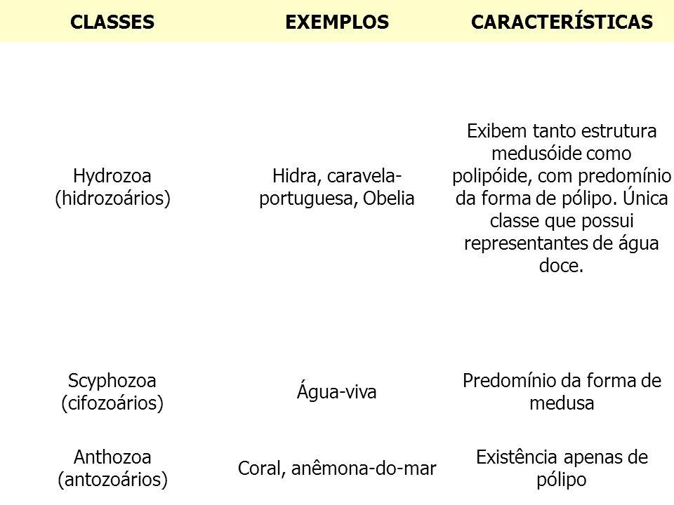 CLASSES EXEMPLOS CARACTERÍSTICAS