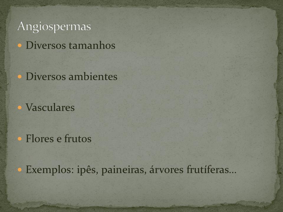 Angiospermas Diversos tamanhos Diversos ambientes Vasculares