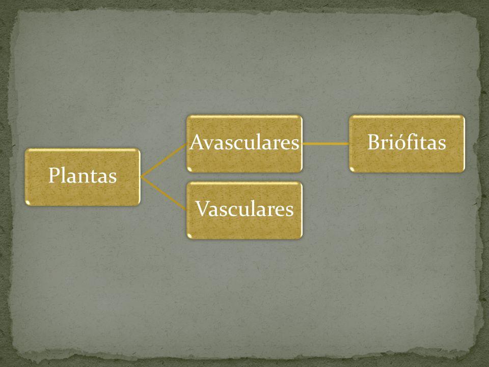 Plantas Avasculares Briófitas Vasculares