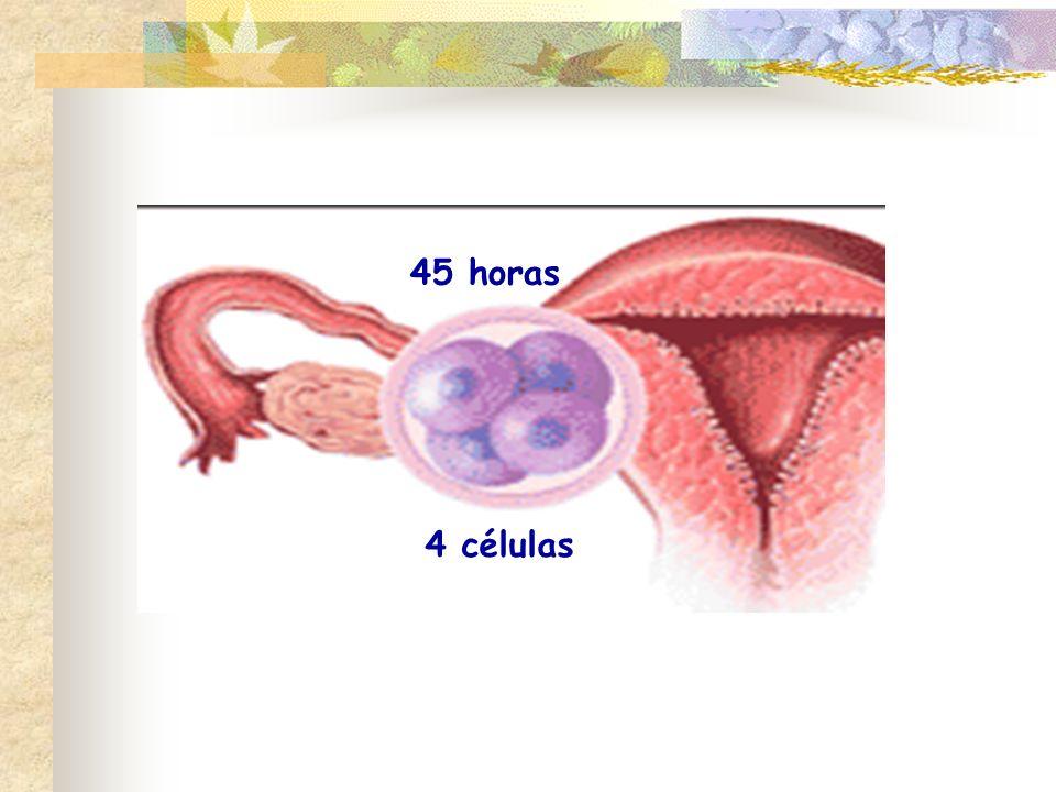 45 horas 4 células