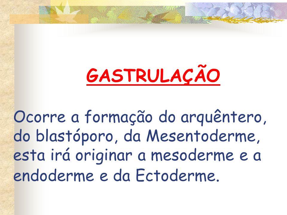 GASTRULAÇÃO Ocorre a formação do arquêntero, do blastóporo, da Mesentoderme, esta irá originar a mesoderme e a endoderme e da Ectoderme.
