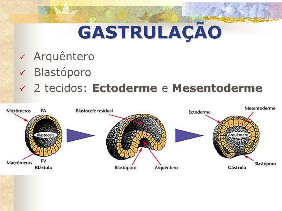 GASTRULAÇÃO Arquêntero Blastóporo 2 tecidos: Ectoderme e Mesentoderme