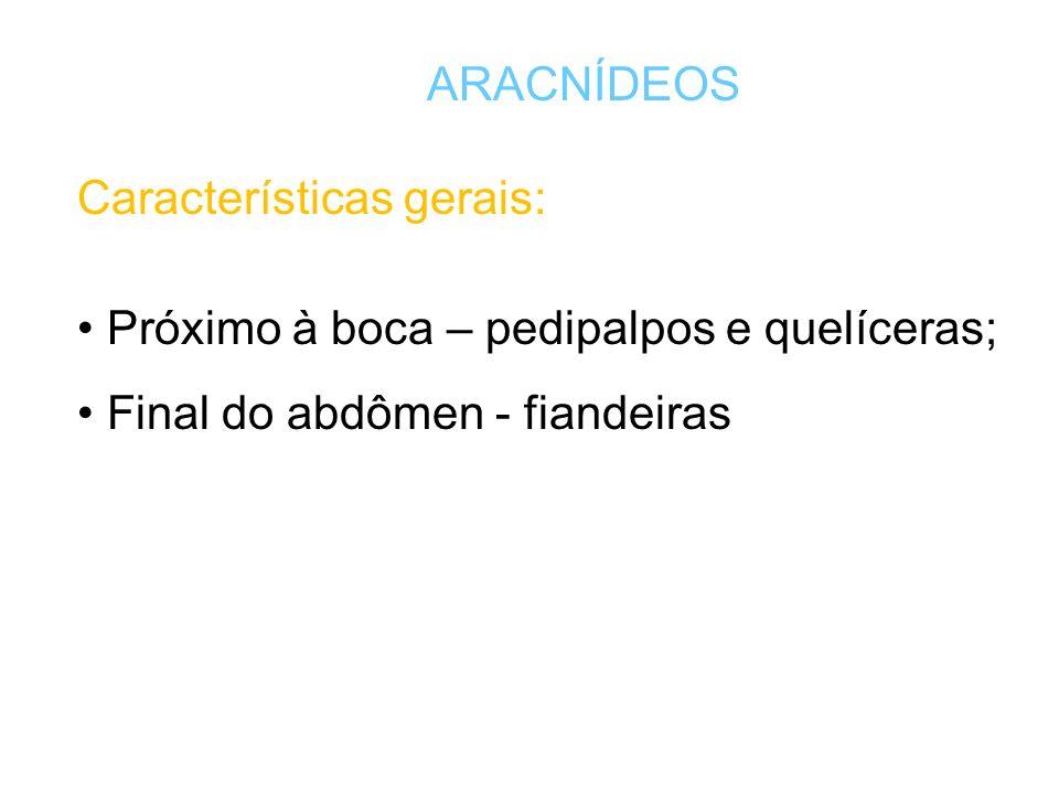 ARACNÍDEOS Características gerais: Próximo à boca – pedipalpos e quelíceras; Final do abdômen - fiandeiras.