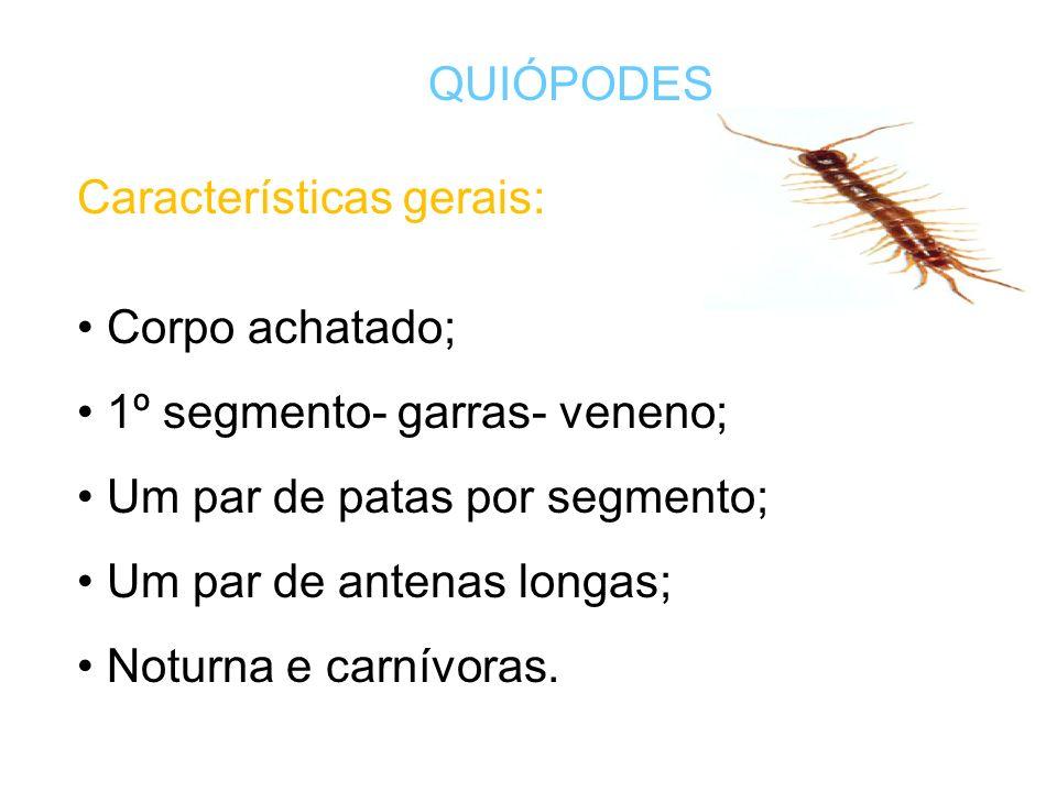 QUIÓPODES Características gerais: Corpo achatado; 1º segmento- garras- veneno; Um par de patas por segmento;