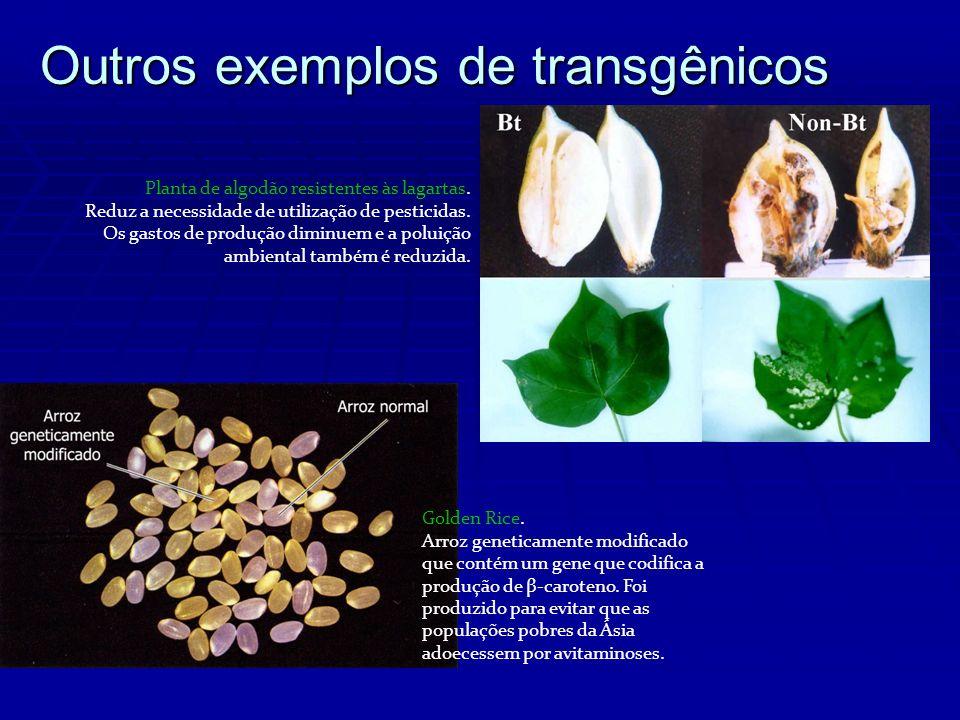 Outros exemplos de transgênicos