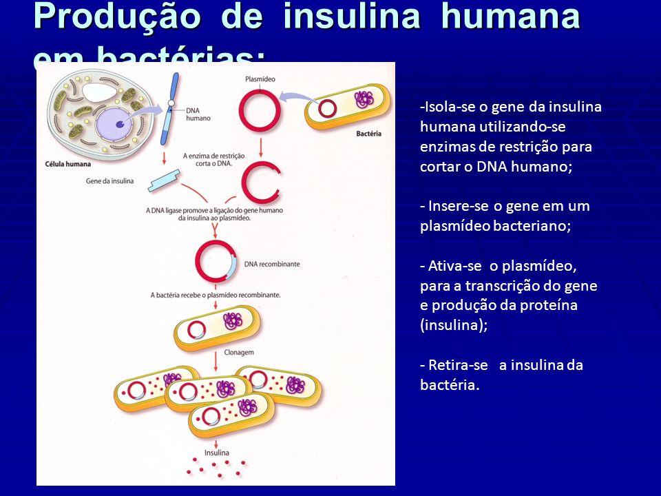 Produção de insulina humana em bactérias: