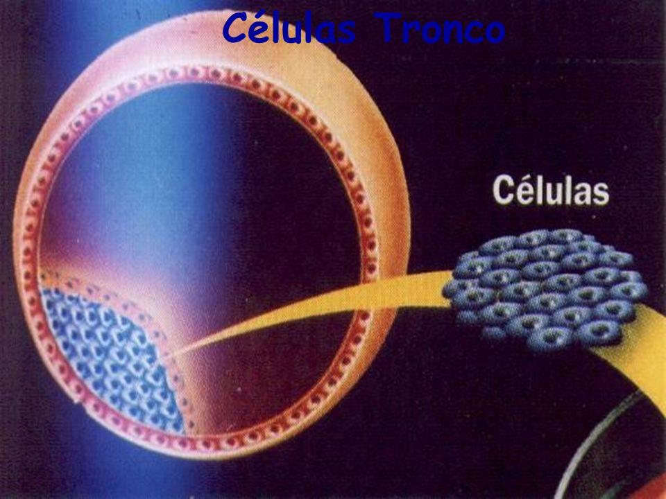 Células Tronco