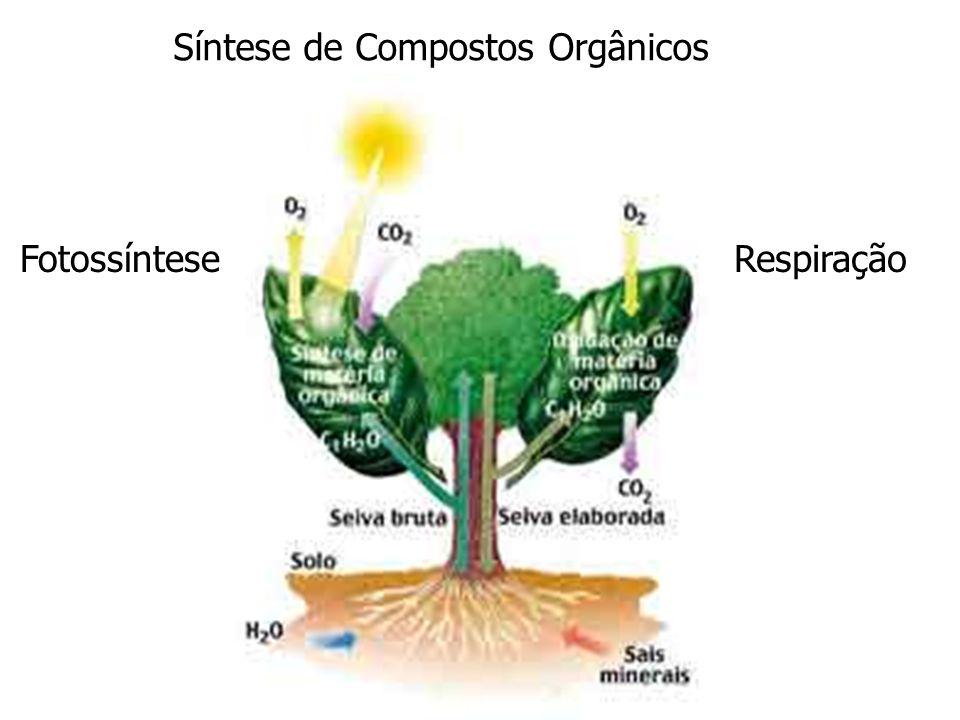 Síntese de Compostos Orgânicos