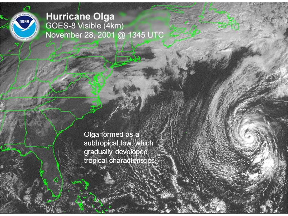 Olga formed as a subtropical low, which gradually developed tropical characteristics