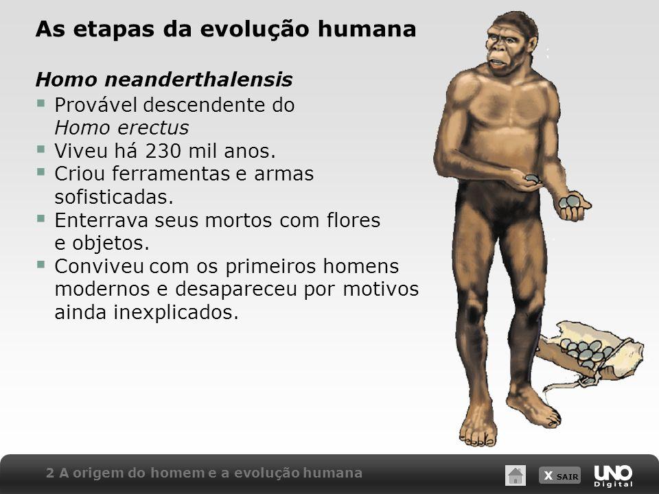 As etapas da evolução humana