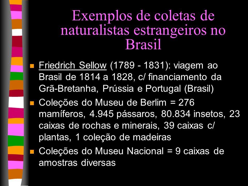 Exemplos de coletas de naturalistas estrangeiros no Brasil