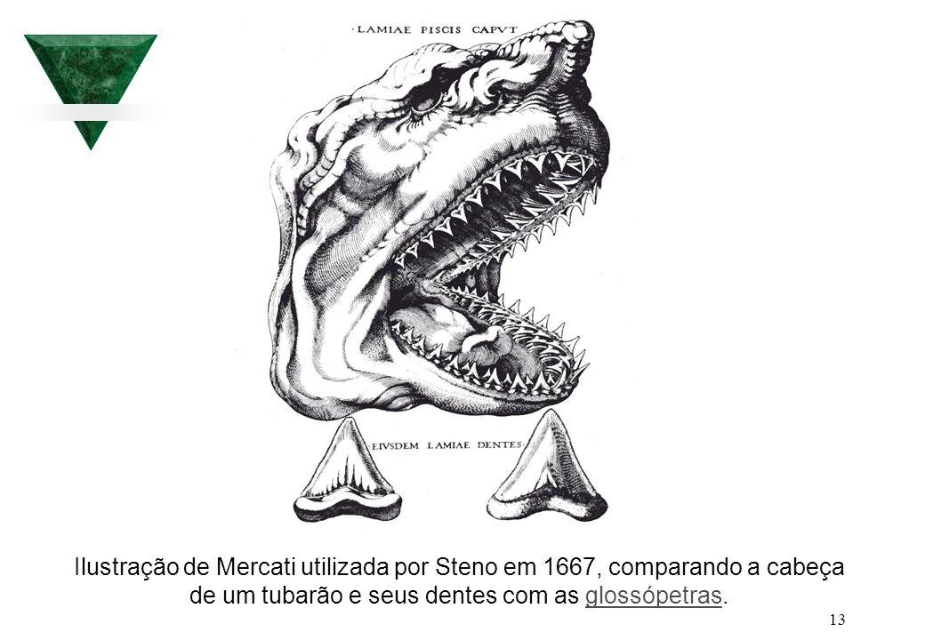 Ilustração de Mercati utilizada por Steno em 1667, comparando a cabeça de um tubarão e seus dentes com as glossópetras.
