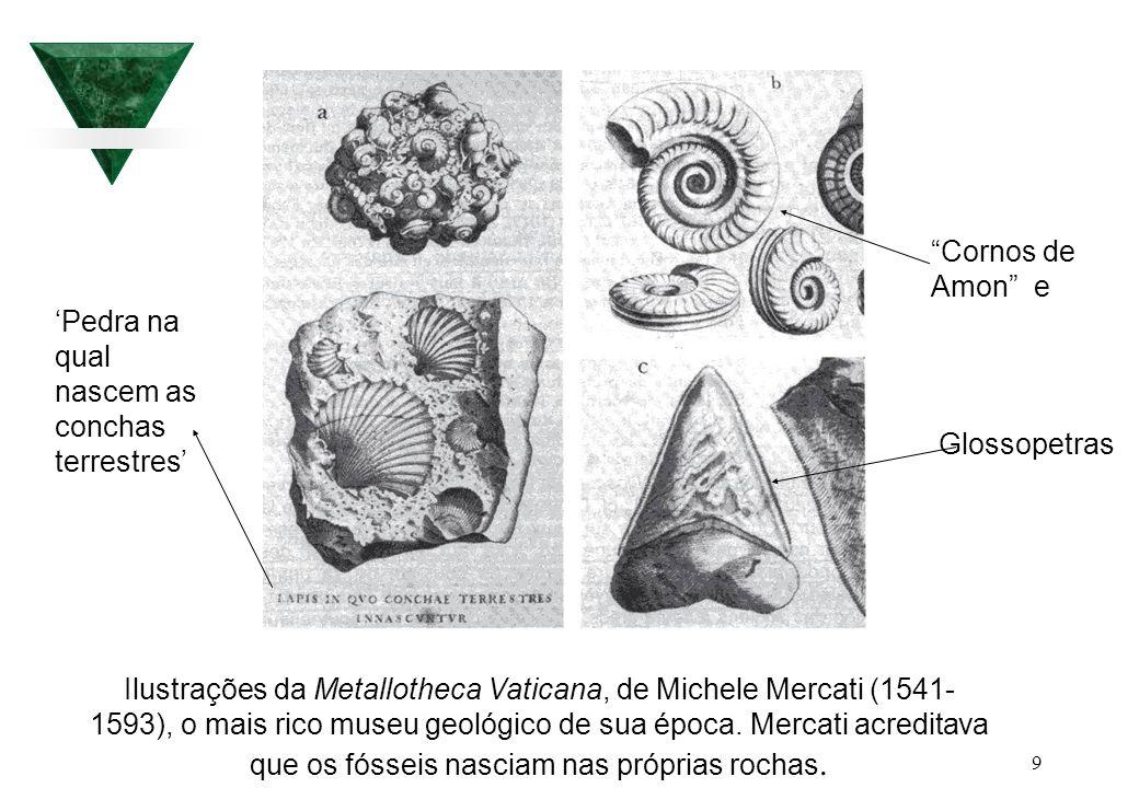Cornos de Amon e Glossopetras. 'Pedra na qual nascem as conchas terrestres'