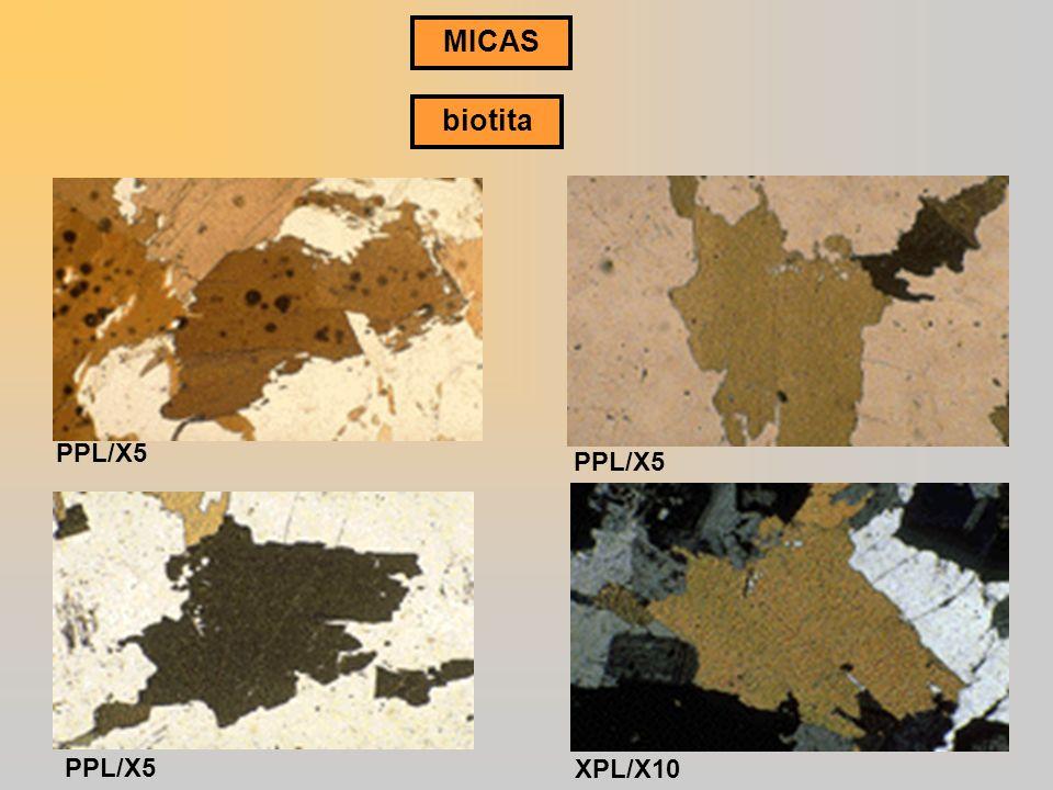 MICAS biotita PPL/X5 PPL/X5 PPL/X5 XPL/X10