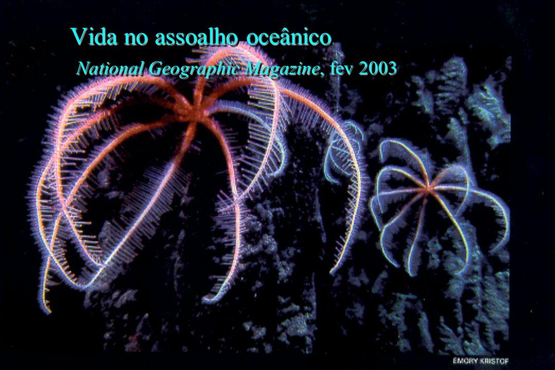 Vida no assoalho oceânico National Geographic Magazine, fev 2003