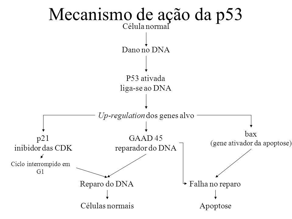 Mecanismo de ação da p53 Célula normal Dano no DNA P53 ativada