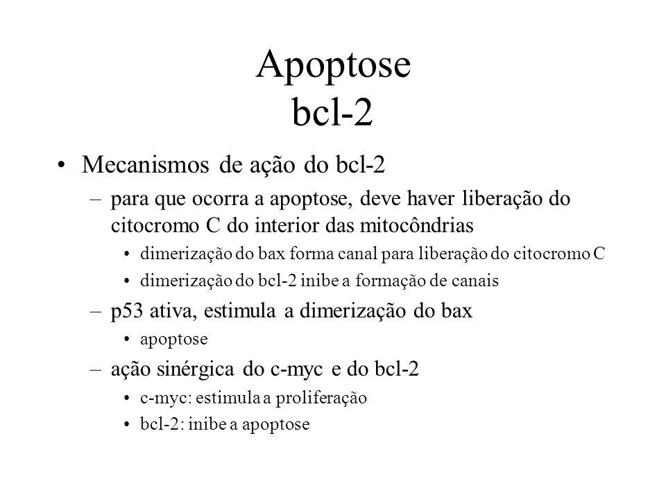 Apoptose bcl-2 Mecanismos de ação do bcl-2