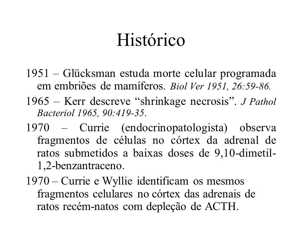 Histórico 1951 – Glücksman estuda morte celular programada em embriões de mamíferos. Biol Ver 1951, 26:59-86.