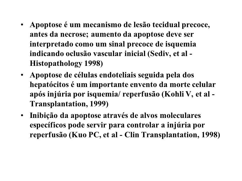 Apoptose é um mecanismo de lesão tecidual precoce, antes da necrose; aumento da apoptose deve ser interpretado como um sinal precoce de isquemia indicando oclusão vascular inicial (Sediv, et al - Histopathology 1998)