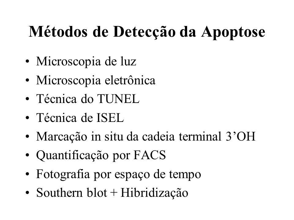 Métodos de Detecção da Apoptose