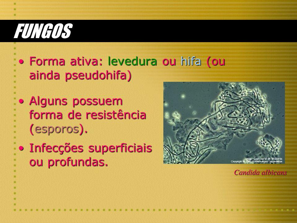 FUNGOS Forma ativa: levedura ou hifa (ou ainda pseudohifa)
