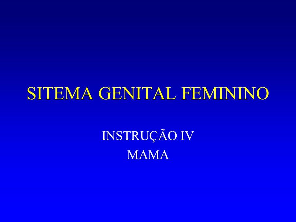 SITEMA GENITAL FEMININO