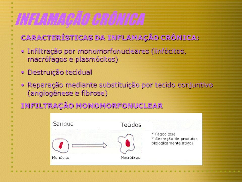 INFLAMAÇÃO CRÔNICA CARACTERÍSTICAS DA INFLAMAÇÃO CRÔNICA: