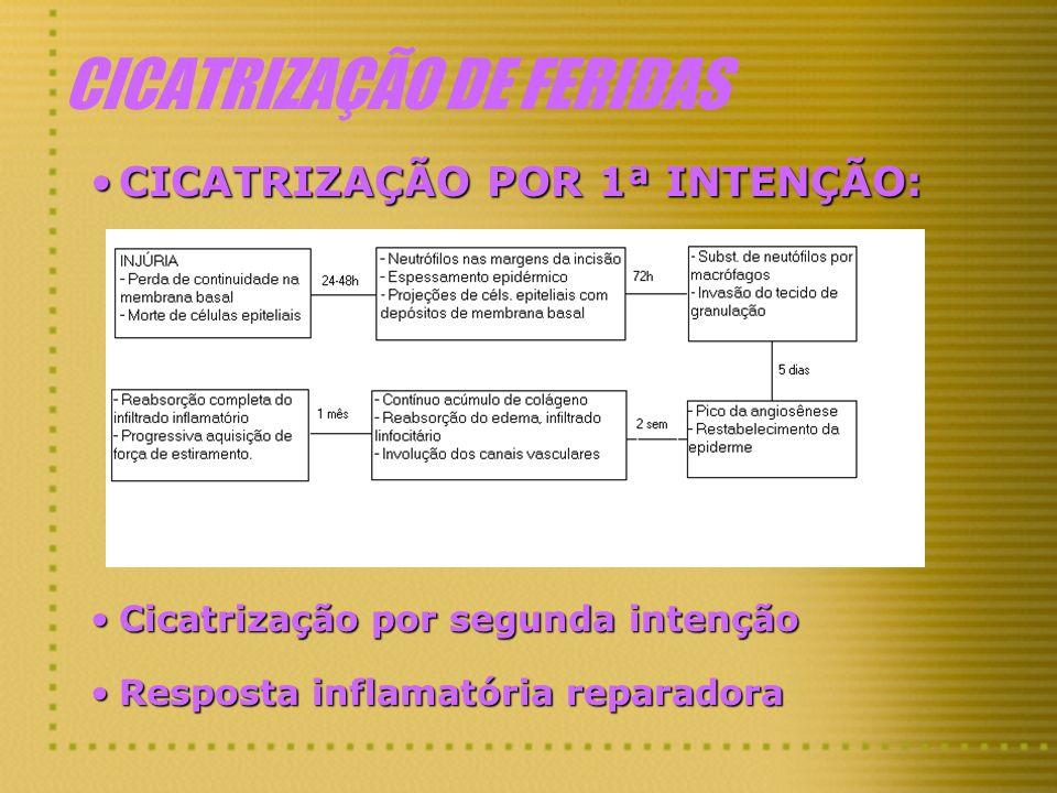 CICATRIZAÇÃO DE FERIDAS