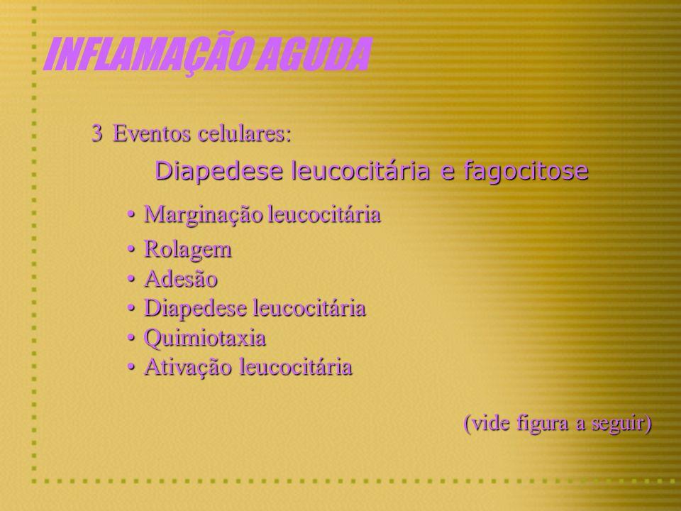 Diapedese leucocitária e fagocitose