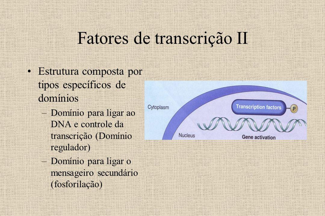 Fatores de transcrição II