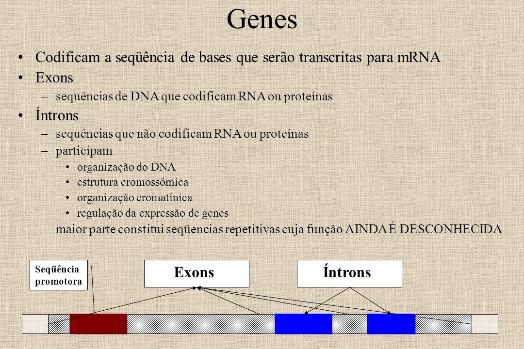 Genes Codificam a seqüência de bases que serão transcritas para mRNA