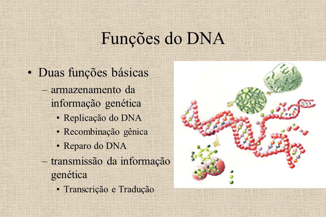 Funções do DNA Duas funções básicas