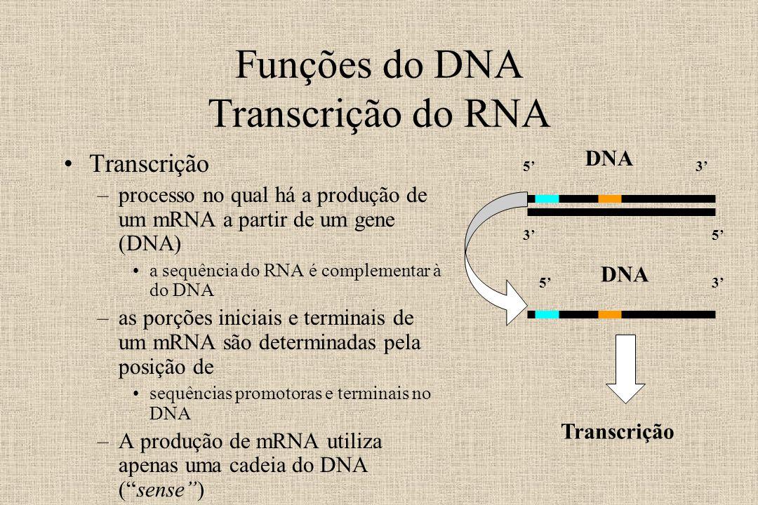 Funções do DNA Transcrição do RNA