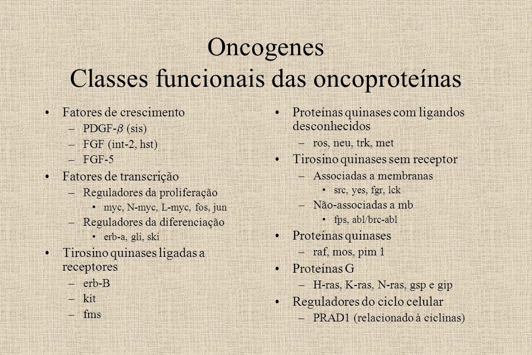 Oncogenes Classes funcionais das oncoproteínas