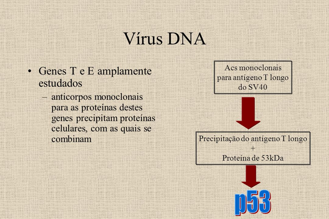 Vírus DNA p53 Genes T e E amplamente estudados