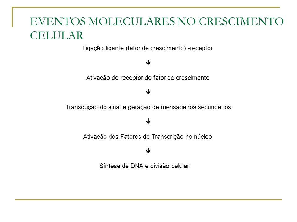 EVENTOS MOLECULARES NO CRESCIMENTO CELULAR
