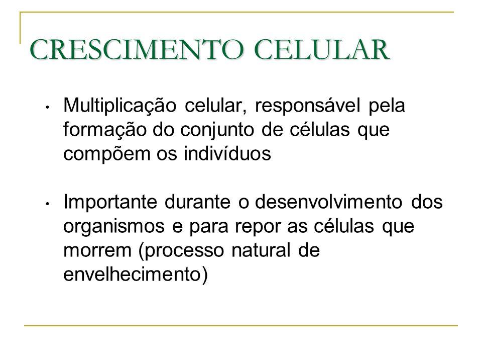 CRESCIMENTO CELULAR Multiplicação celular, responsável pela formação do conjunto de células que compõem os indivíduos.