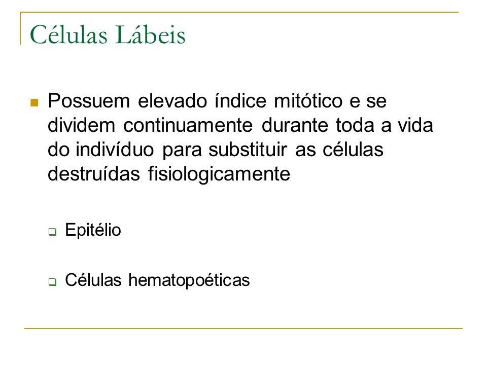 Células Lábeis