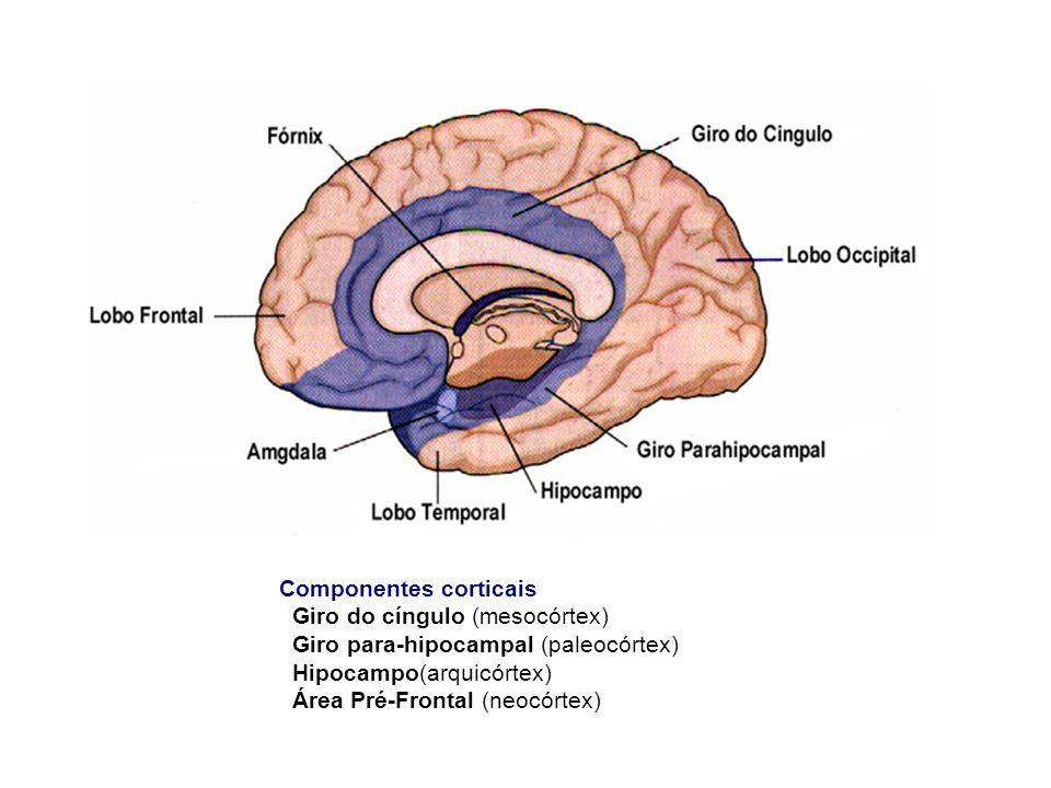 Componentes corticais