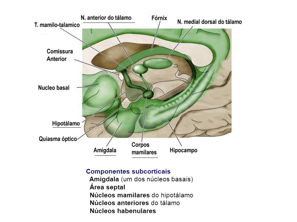 Componentes subcorticais