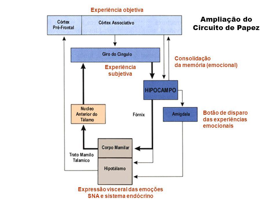 Expressão visceral das emoções SNA e sistema endócrino