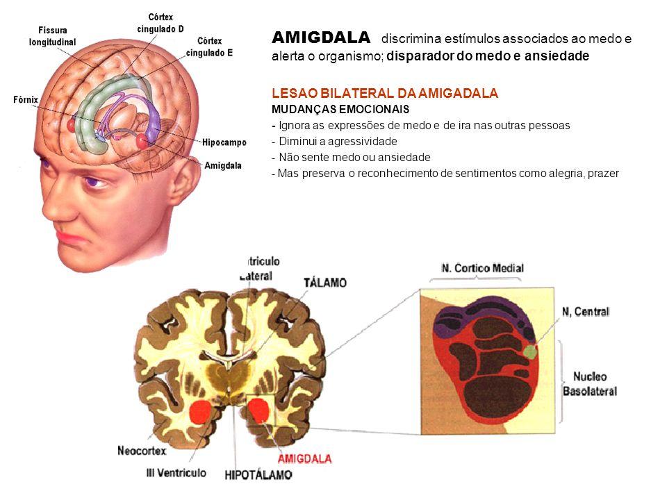 AMIGDALA discrimina estímulos associados ao medo e alerta o organismo; disparador do medo e ansiedade