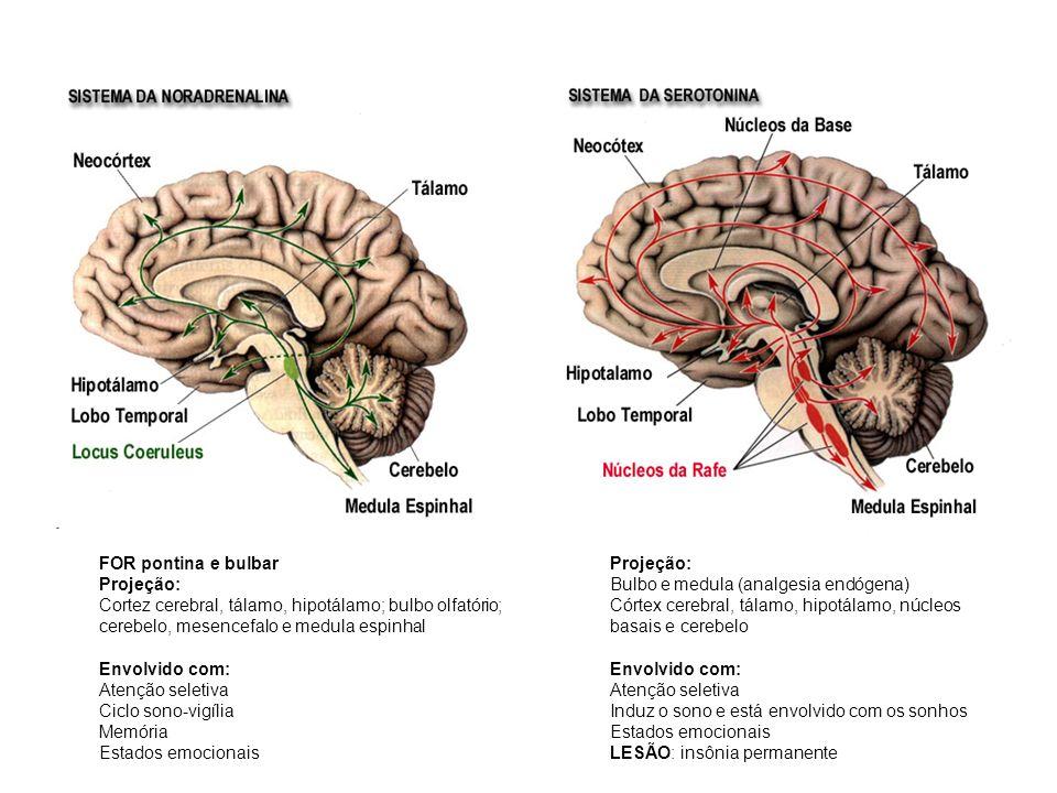 FOR pontina e bulbar Projeção: Cortez cerebral, tálamo, hipotálamo; bulbo olfatório; cerebelo, mesencefalo e medula espinhal.