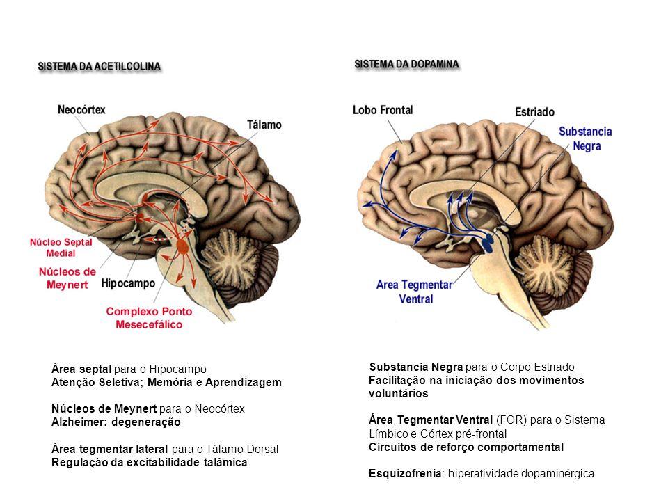 Área septal para o Hipocampo