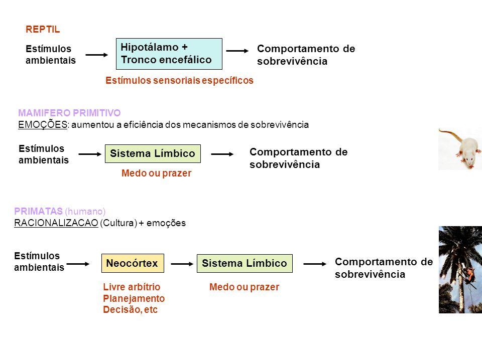 Hipotálamo + Comportamento de Tronco encefálico sobrevivência